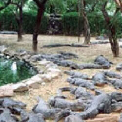 Crocodile Trip Goa Tourist Attraction